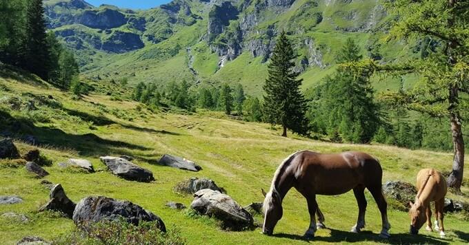 Konj na planini