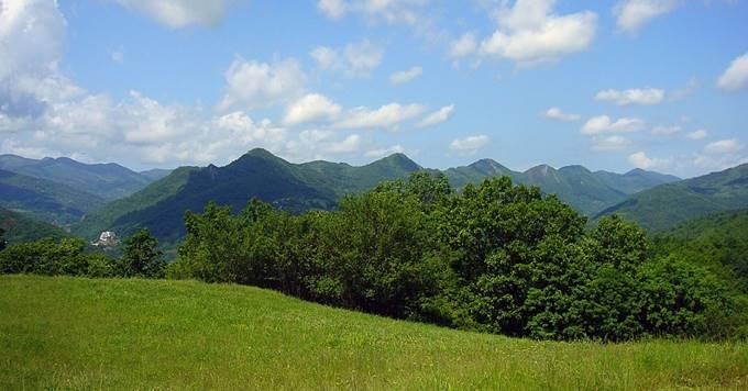 Zelena šuma na planini Kopaonik