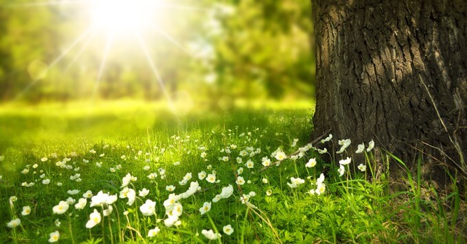 cveće i zelenilo na planini