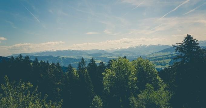 šuma na planini